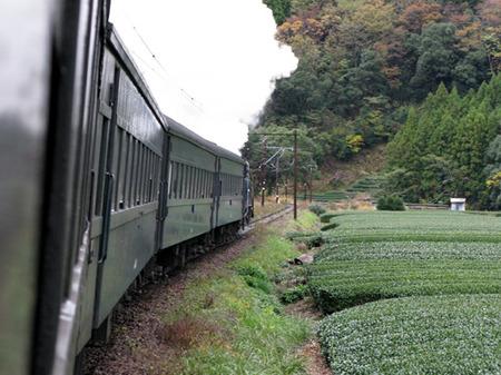 Ooigawa01
