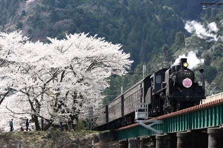 Sakura08