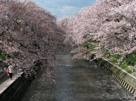 Sakura30