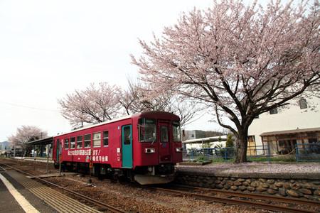 Sakura37