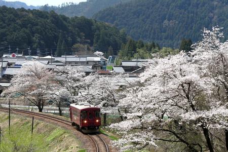 Sakura38