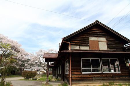 Sakura41