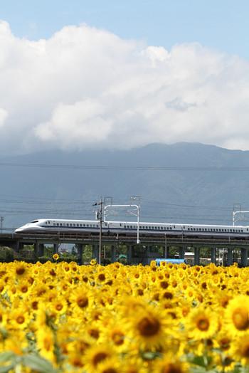Himawari07