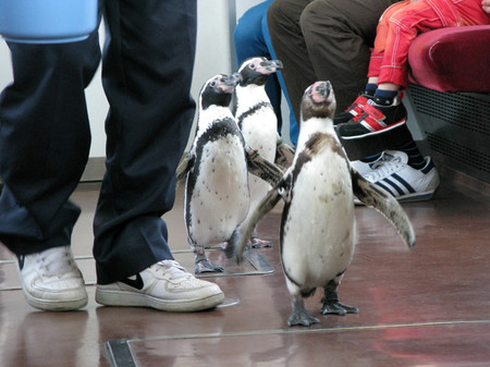 Penguin07