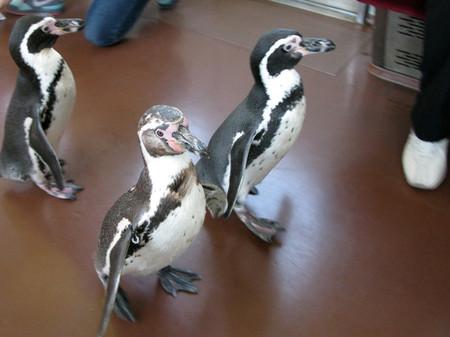 Penguin08