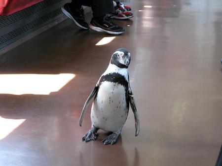 Penguin09