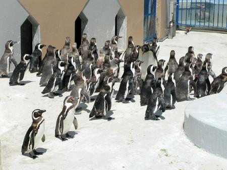 Penguin13
