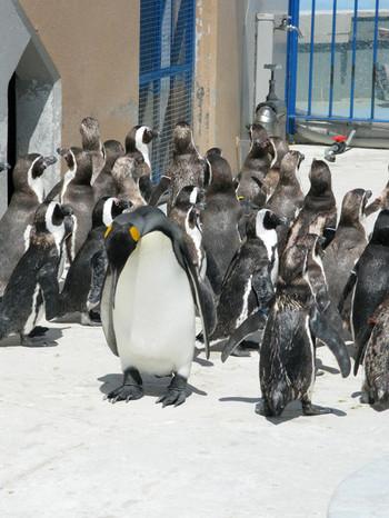 Penguin14
