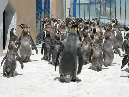 Penguin15