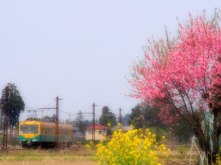 Toyama24