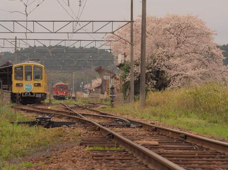 Sakurao01
