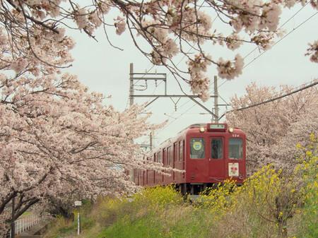 Sakura104