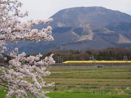 Sakura105