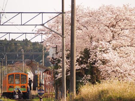 Sakura106