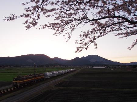Sakura107