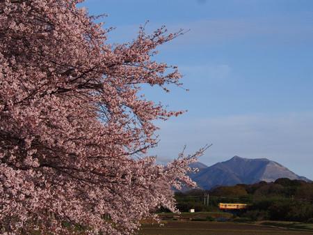 Sakura120