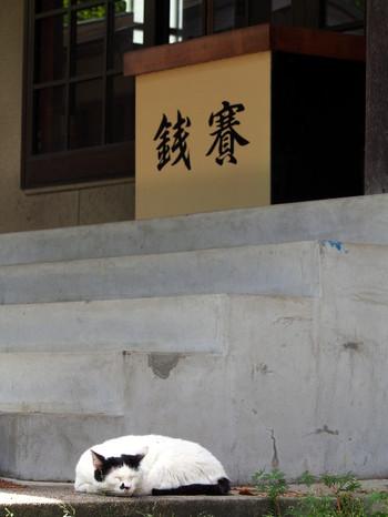 Tsutsuji04