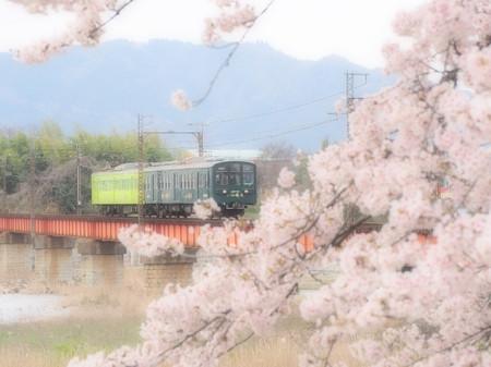 Sakura56