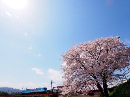 Sakura57