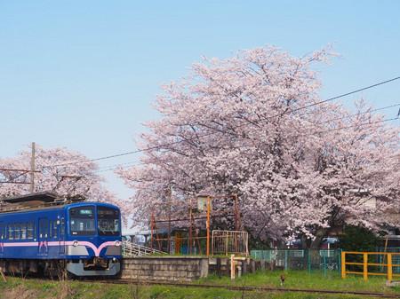 Sakura58