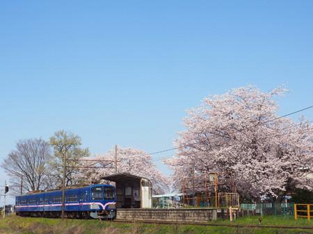 Sakura59