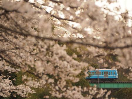Sakura62