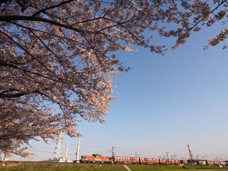 Sakura63