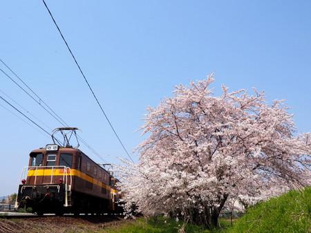 Sakura68