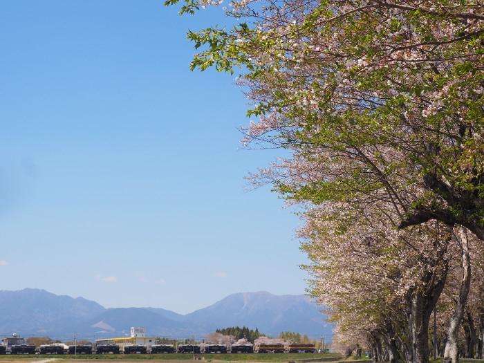 Hazakura04