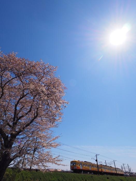 Hazakura05