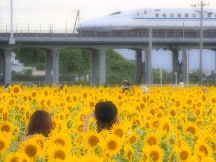 Himawaei03