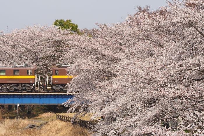 Sakura156
