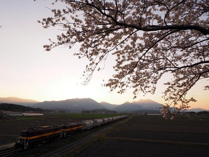 Sakura157