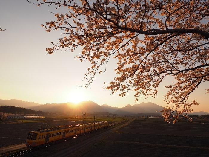 Sakura158