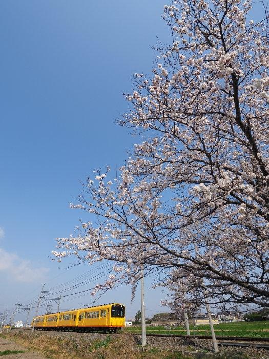 Sakura160_1