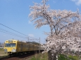 Sakura166