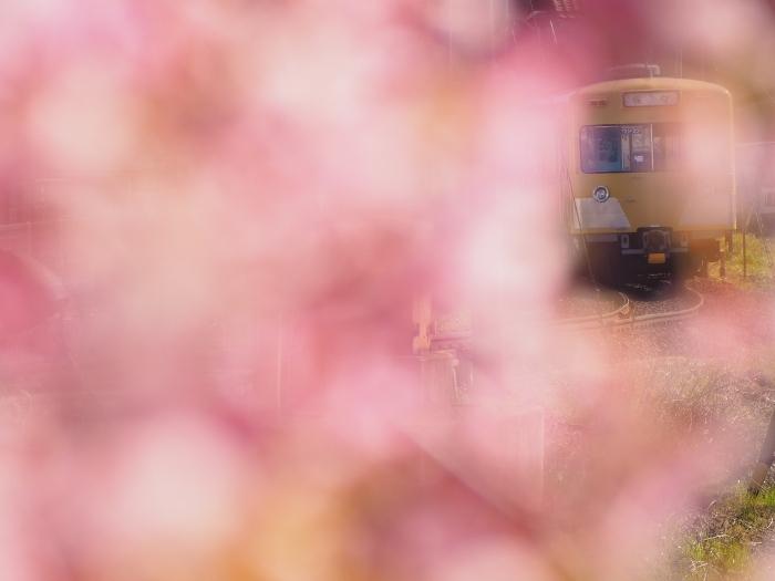 Sakura01_20200311144901