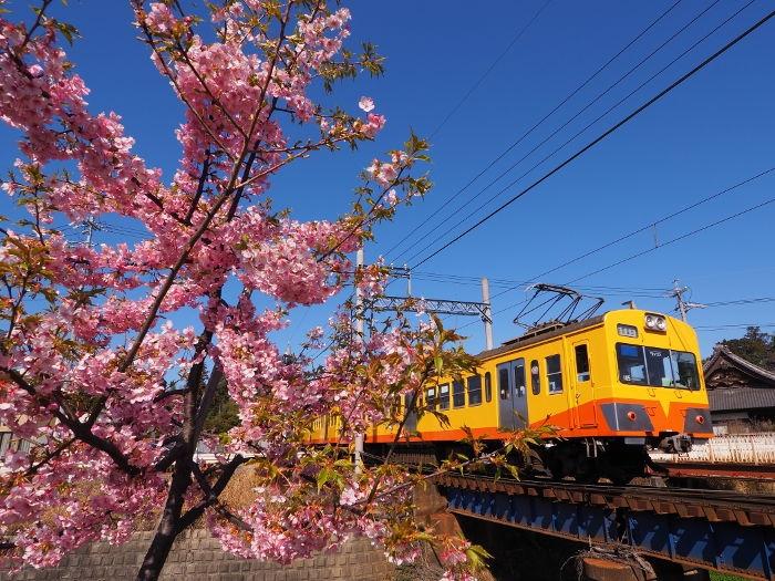 Sakura02_20200311144901