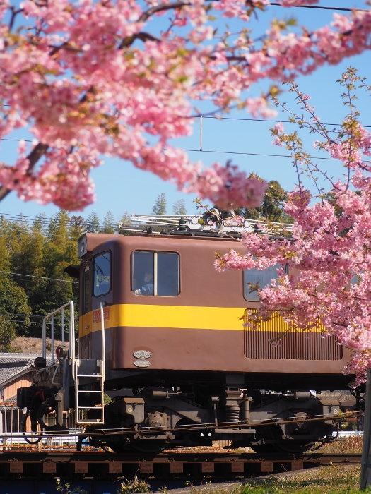 Sakura03_20200311144901