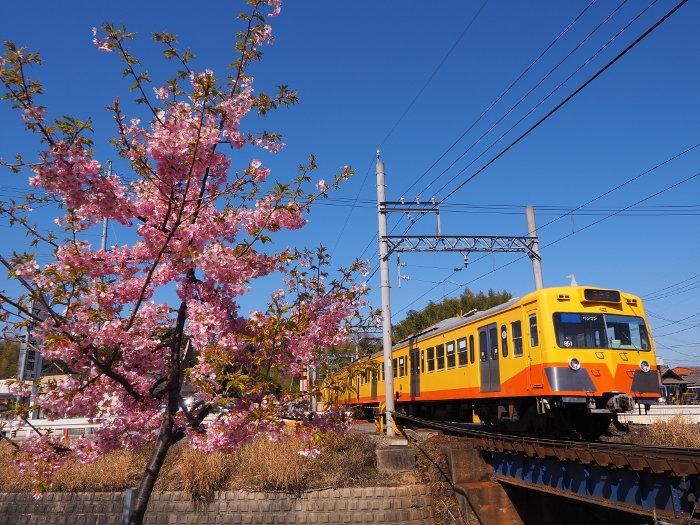 Sakura04_20200311144901